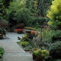 Planting in layers: The terrace at the Dunn Garden, Seattle