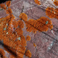 Pattern of lichen on stone, Montana