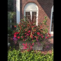 Cordyline and annuals in a summer trough planting