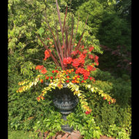 Phormium, pelargoniums, lantana and fuchsia make a summer display