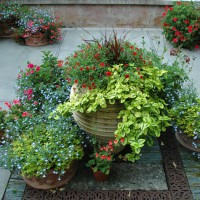 Seasonally changing containers are a focus on the Dunn Garden patio