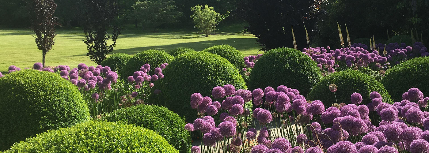 Alliums in a Vashon Island garden